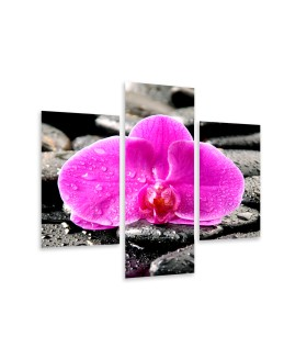 Multi-canvas 3x Orchid stones